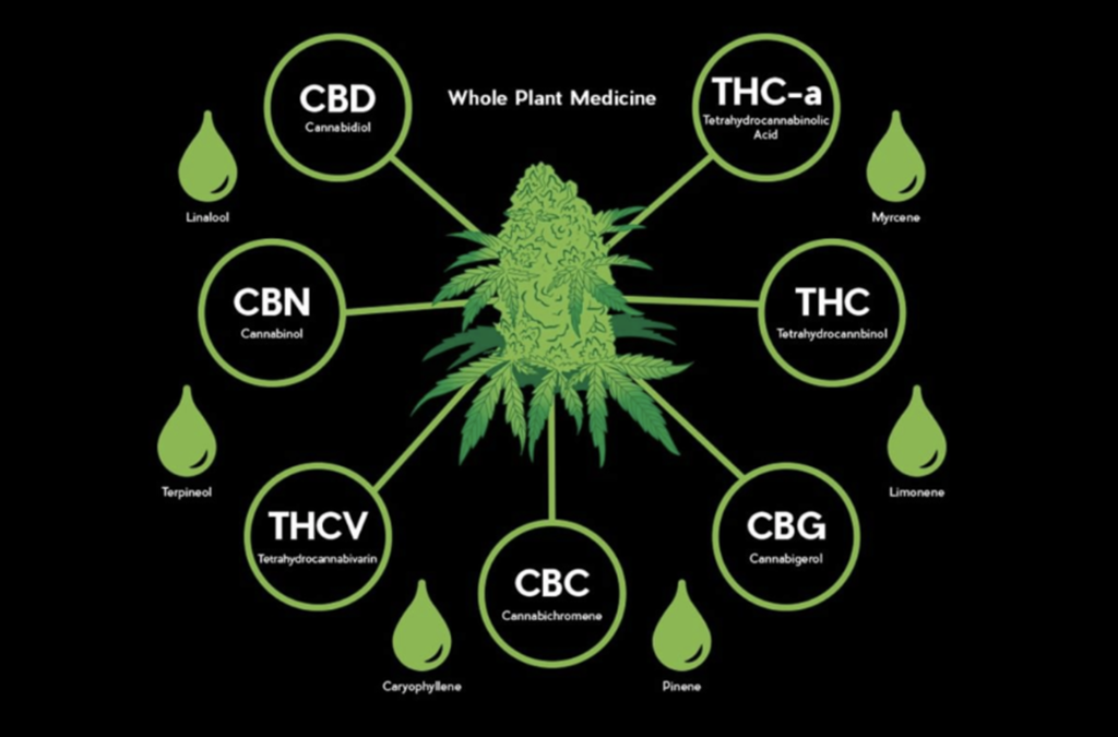 Synergy of THC and CBD: Why We Need Both